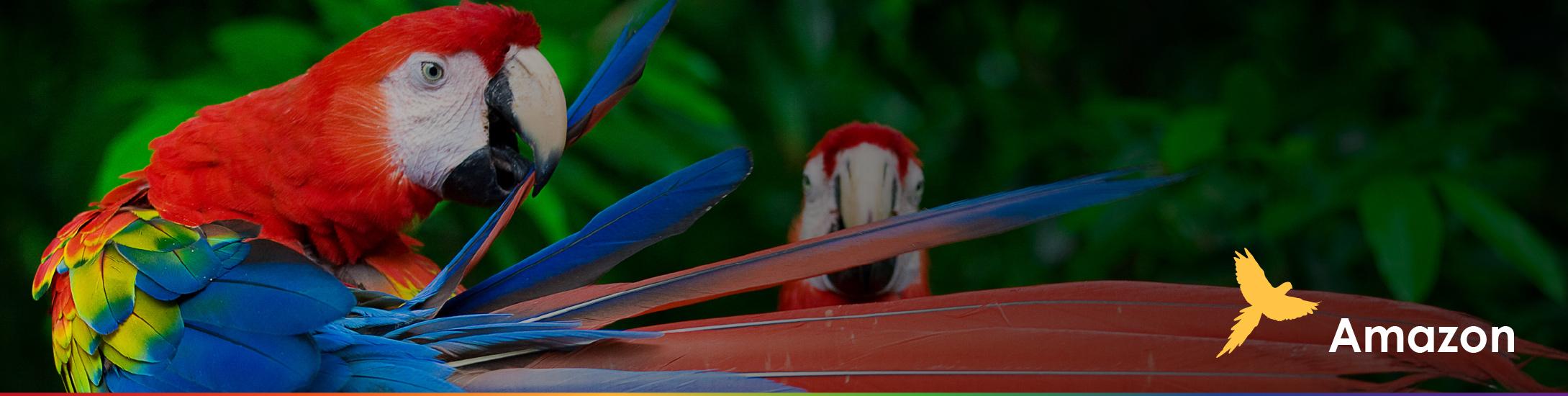Amazon Ecuador tours for everyone safe travels wildlife