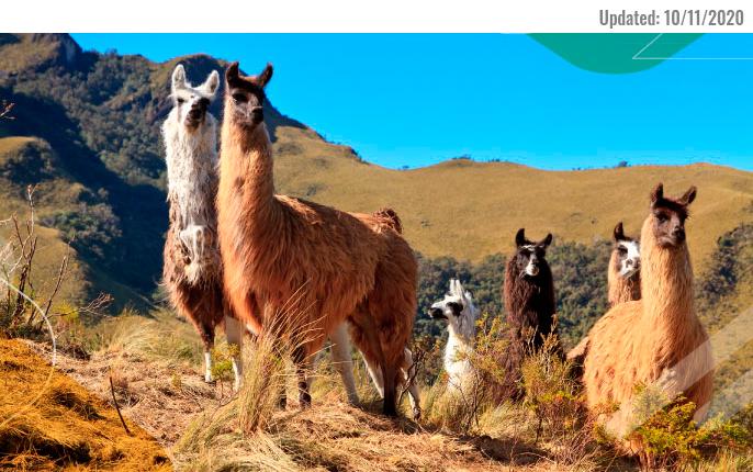 Andean Travel Company Galapagos Ecuador highlands andes llama