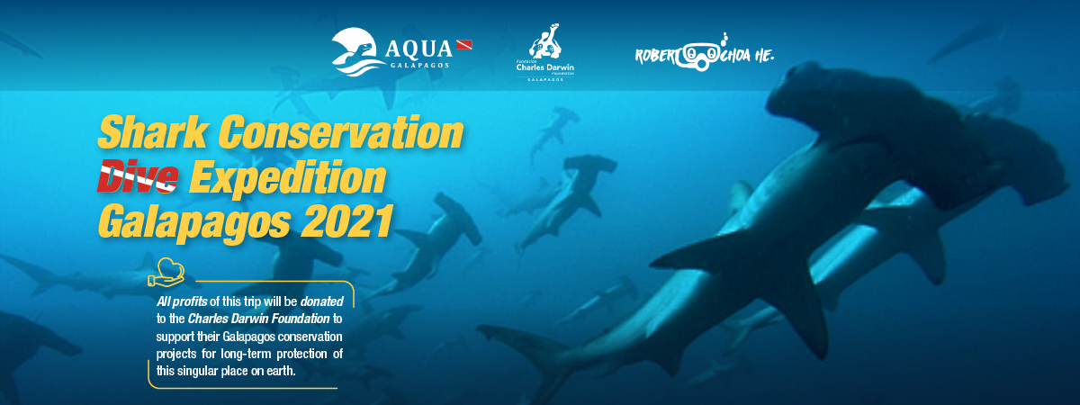 Shark conservation dive expedition Galapagos 2021