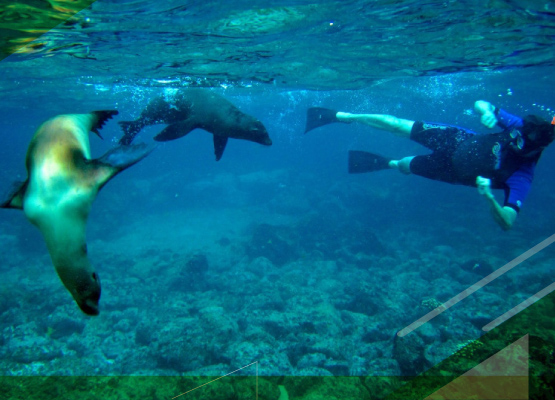 snorkeling-in-galapagos-islands-prince-phillips